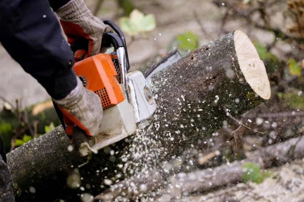 Schedule Tree Removal in Bridgeville, DE Today